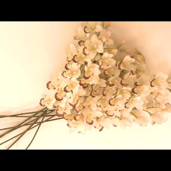 New Long Stem Orchids